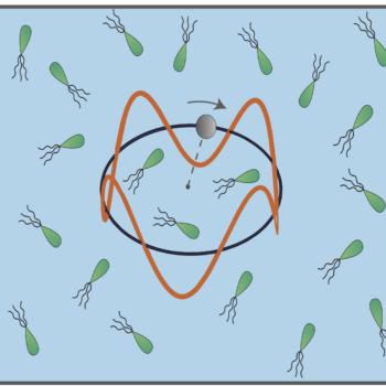 ashwinbacteria